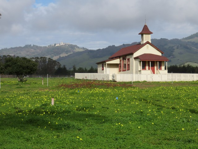 Serene pasture at Hearst Ranch. Wildly ostentatious Hearst Castle is in the distance.