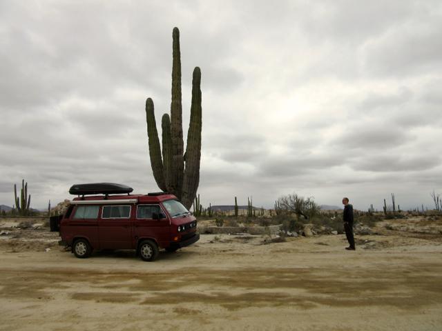 Monster cactus