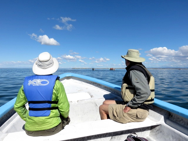 We watched whales from a little six-seater motor boat. It cost us $50 USD per person.