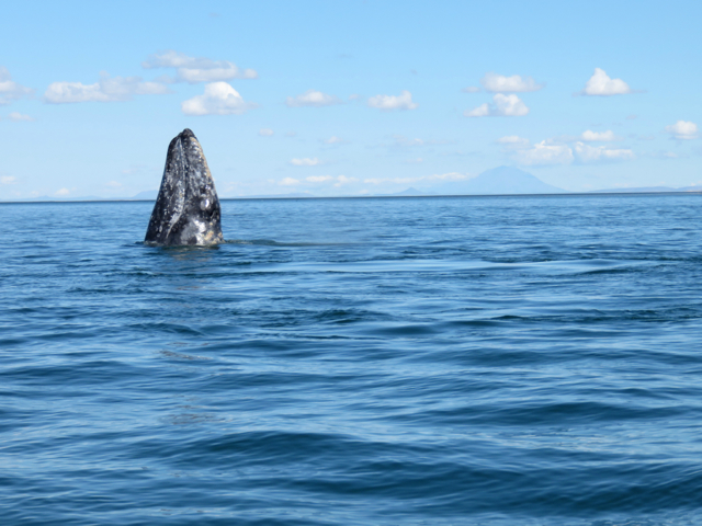 Mama whale is checking us out. No zoom lens - that's how close she was!