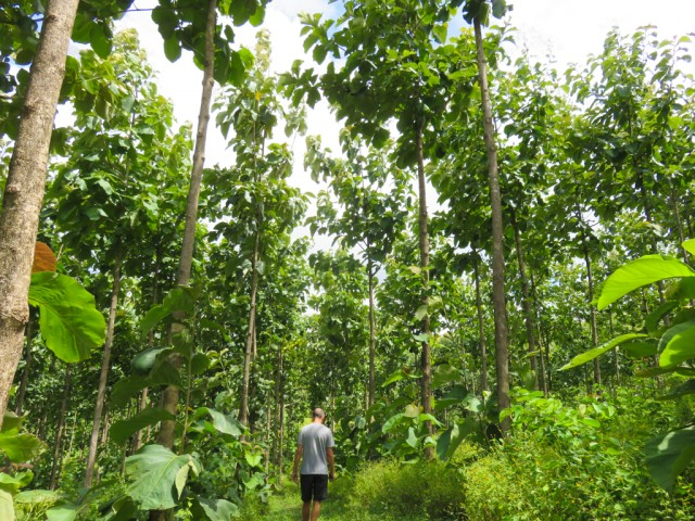 The finca has several kilometres of interesting nature trails