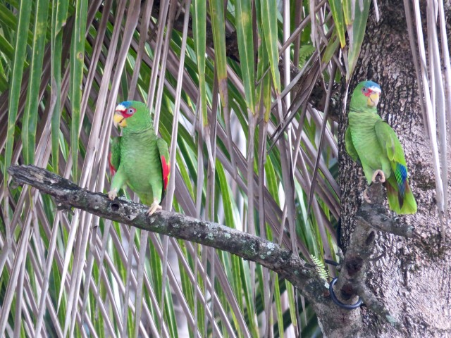 …but we got to see wild parrots.