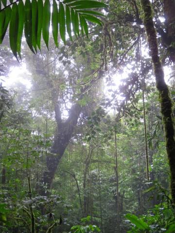 Rainy_Season_Blog - 30 of 66