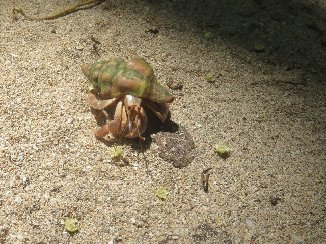 Hermit crabs crawled all over the park