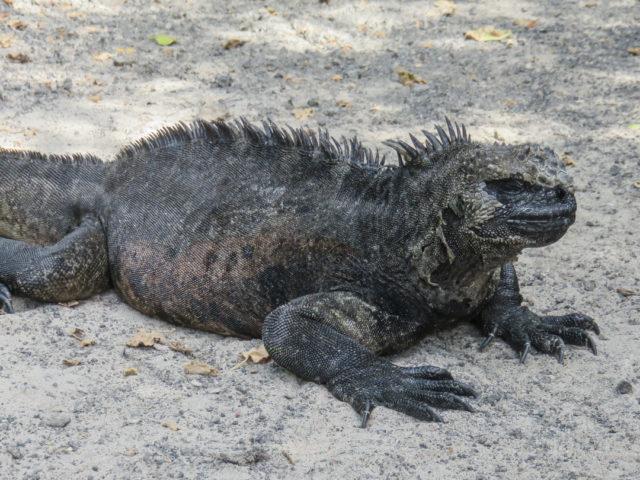 Galapagos-35