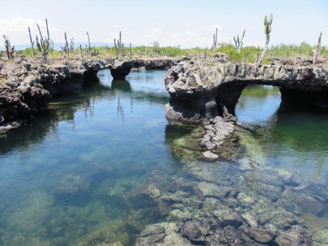 Galapagos-48