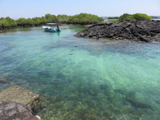 Galapagos-73