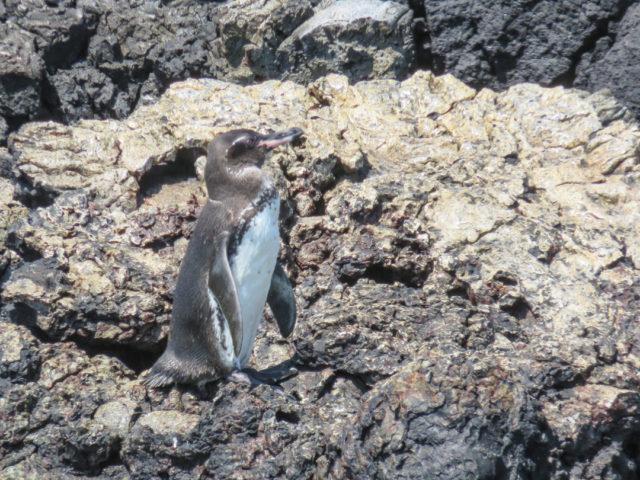 Galapagos-75