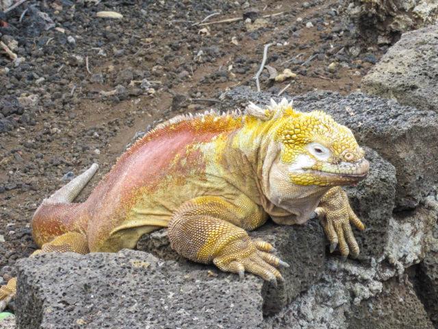 Galapagos-89