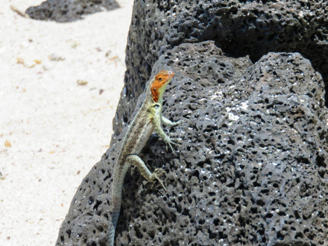 Galapagos-91