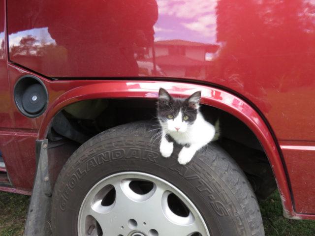 Arie's cat, Moki