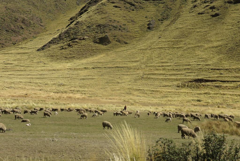 Titicaca-3.jpg